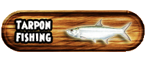 Tarpon Fishing Miami