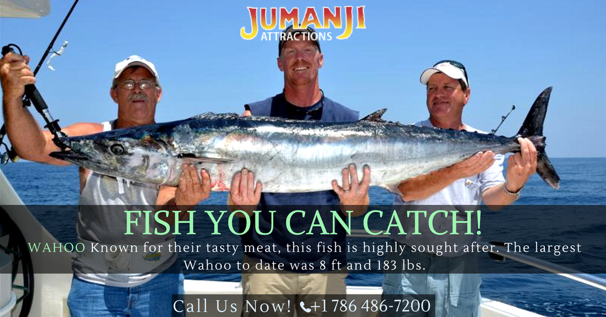 Surefire tips to catch kingfish in Miami